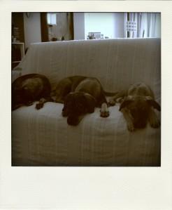 A foto clássica do trio parada dura.